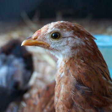 Was sind Tierrechte?