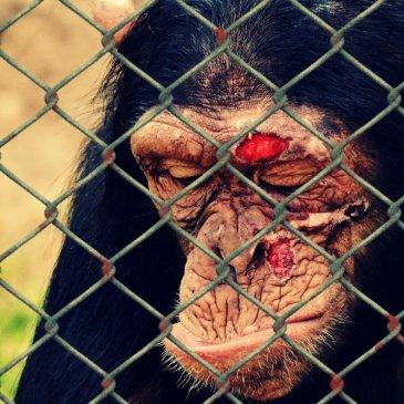 """""""Wer Tiere retten will, muss Realist werden"""""""